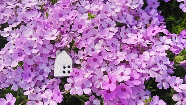 紫の花に埋もれた小さな白い家